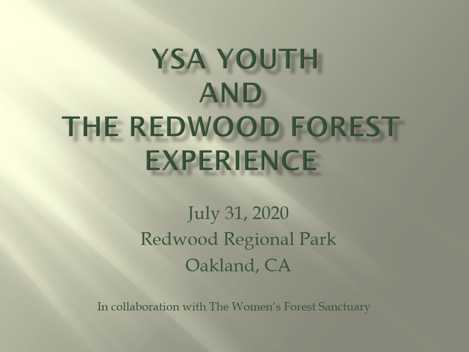 YSA Youth and the Redwood Forest     Experience